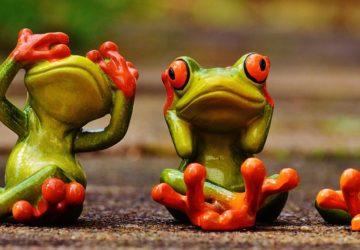 Niech trójnożna żaba będzie z tobą….