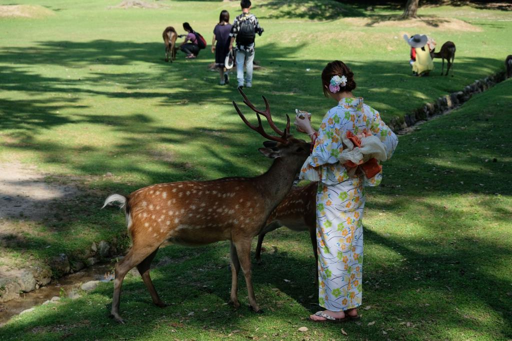 Nara – japońska przygoda z jelonkami